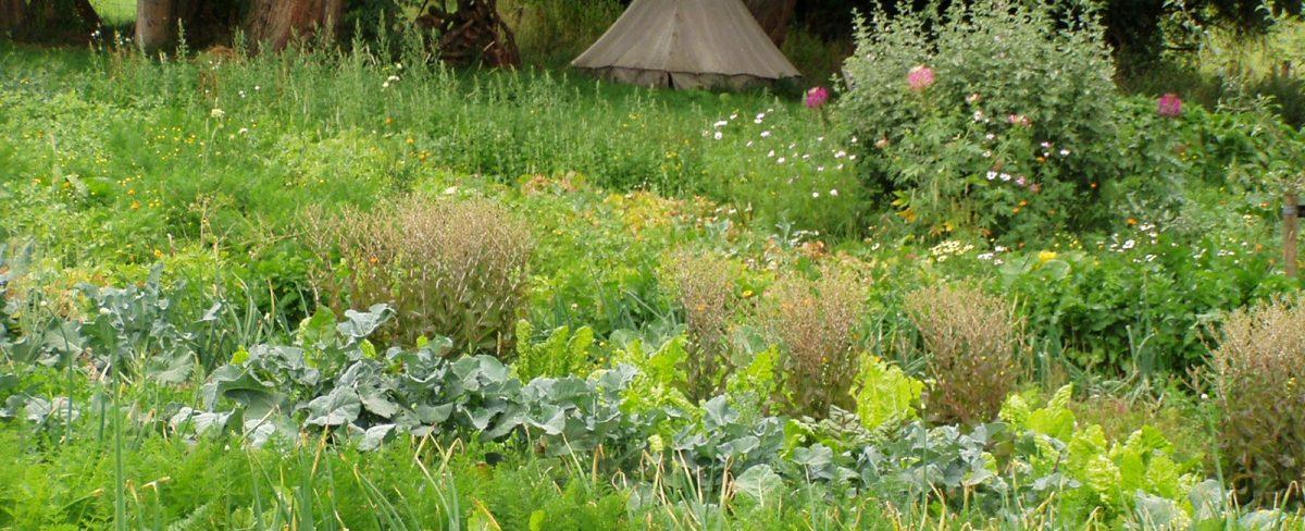 Jardin Bio de Jenneret –  asbl Pourquoi Pas !